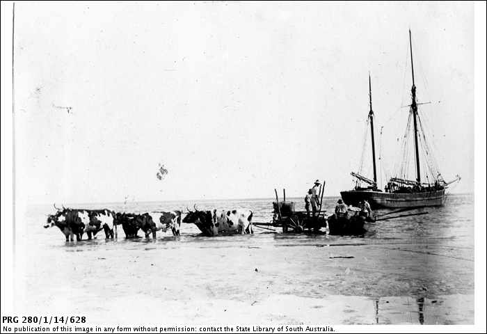 PRG280_1_14_628_bullocks_cart_in_sea